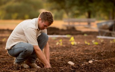 ONE HEALTH: From the health of soils to the people health, there is just one step!