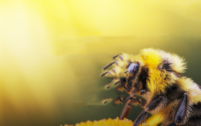 Did you Know about …  Maggie the BEE?