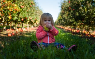How to feed children well?